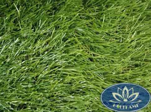 Mặt trên cỏ nhân tạo sân vườn CNT02