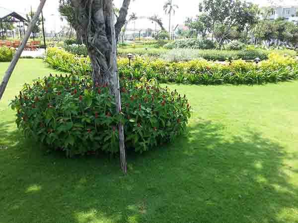 Các loại cỏ trồng trong nhà