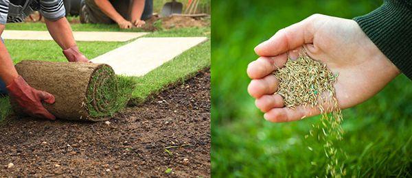 Chăm sóc các loại cỏ sân golf tự nhiên không hề dễ dàng