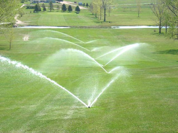 Kỹ thuật trồng cỏ sân golf