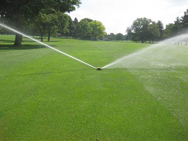 Quy trình chăm sóc cỏ sân golf