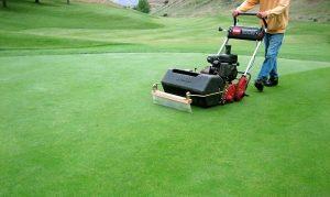 trồng cỏ sân golf